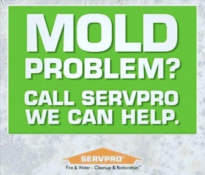 Do You Have Mold?
