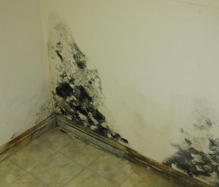 Mold Remediation Mold Myths & Facts by SERVPRO of Overbrook/ Wynnfield